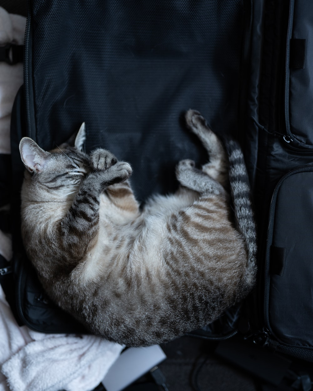 silver tabby cat lying on black textile