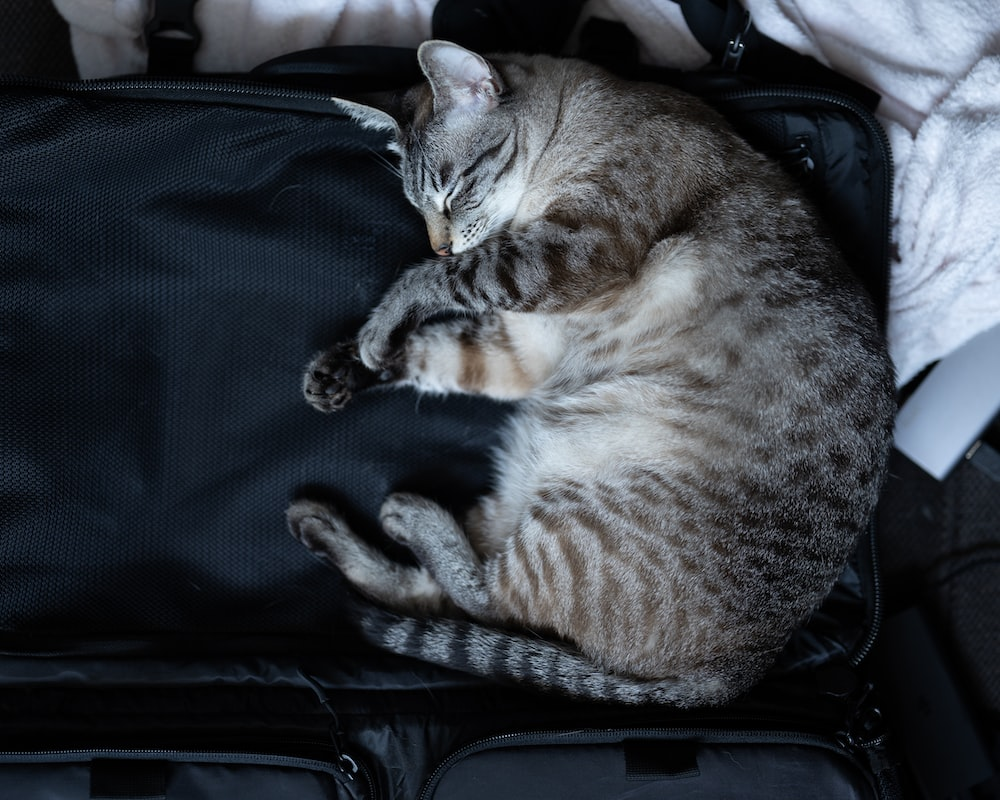 brown tabby cat lying on black soft-side luggage