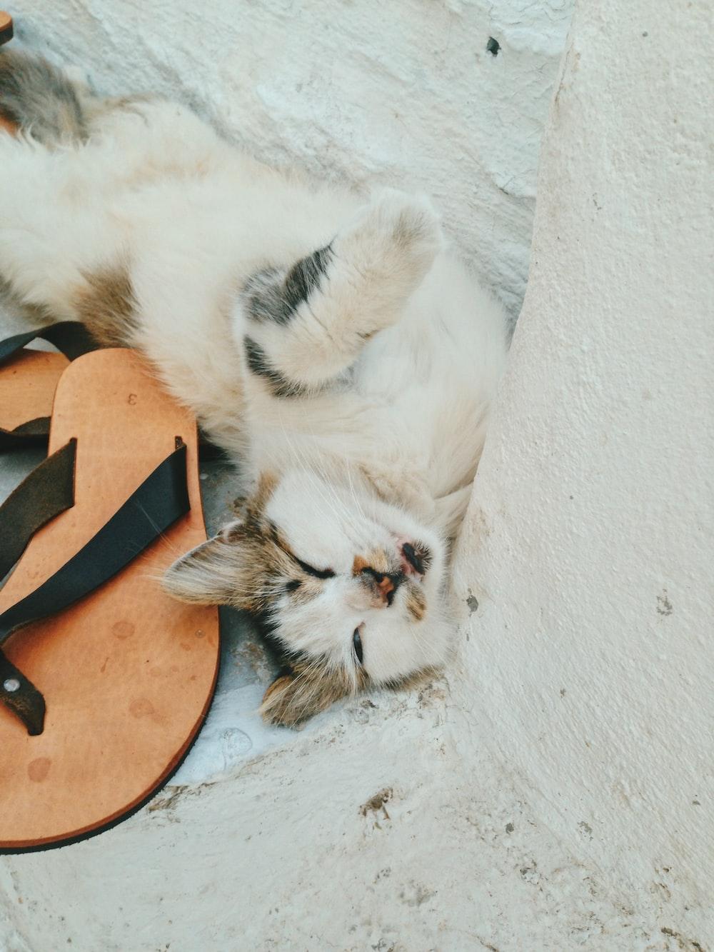 cat sleeping beside flip-flops