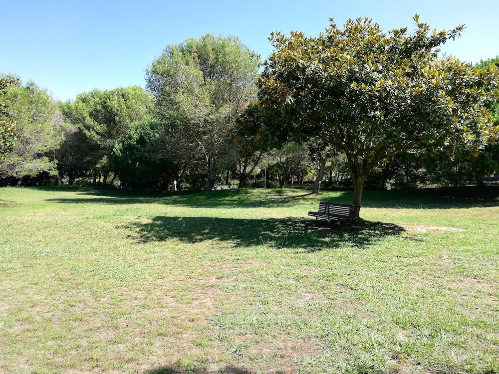 brown bench under tree