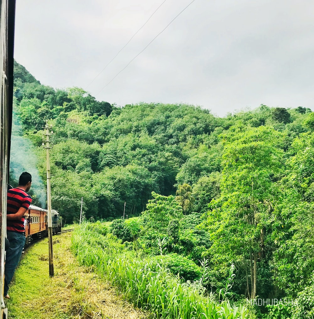 man standing in train near trees at daytime