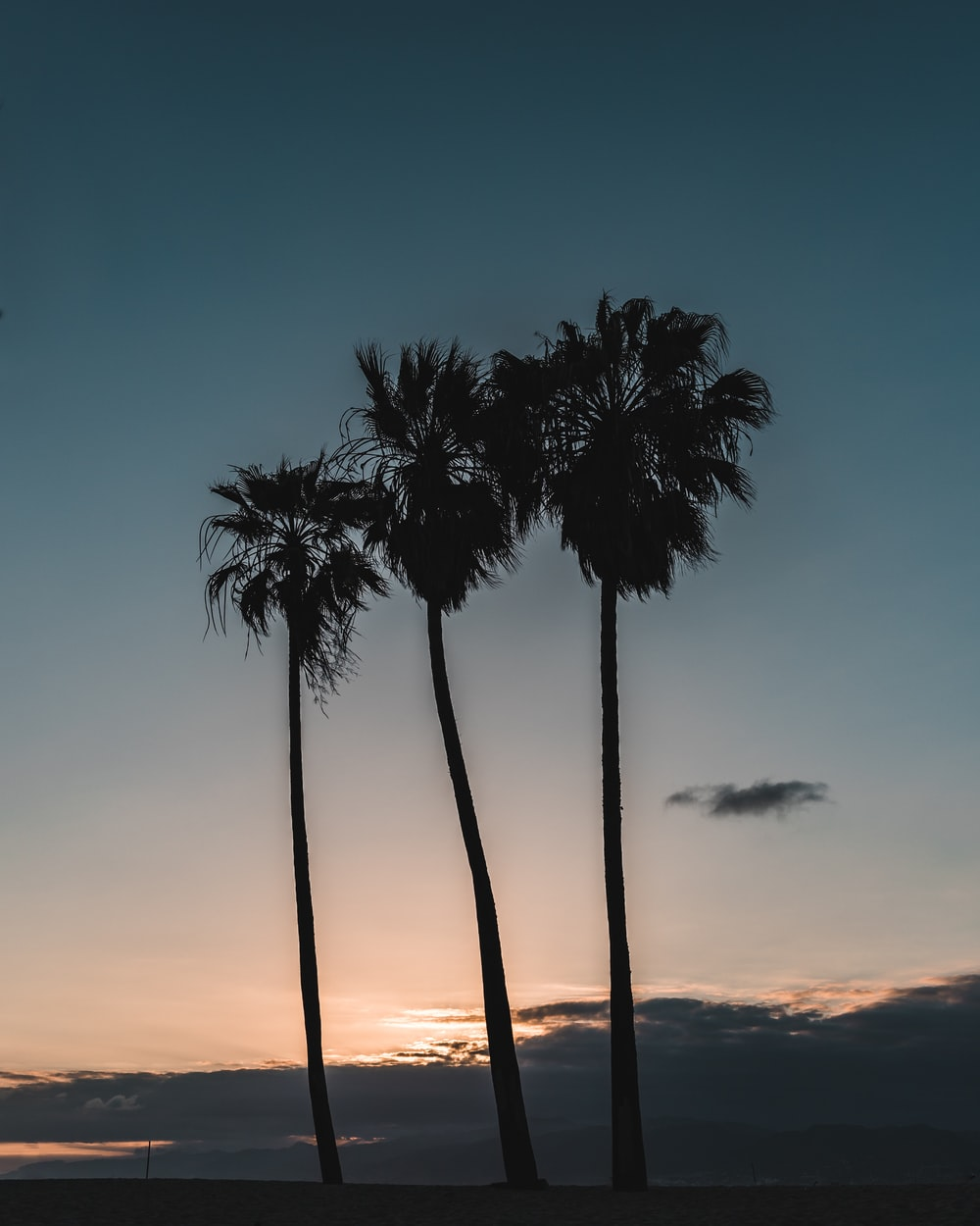 silhouette of three tall palm trees in beach