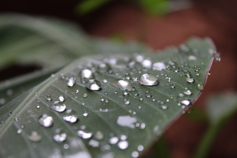 green leaf with water droplets close-up photography