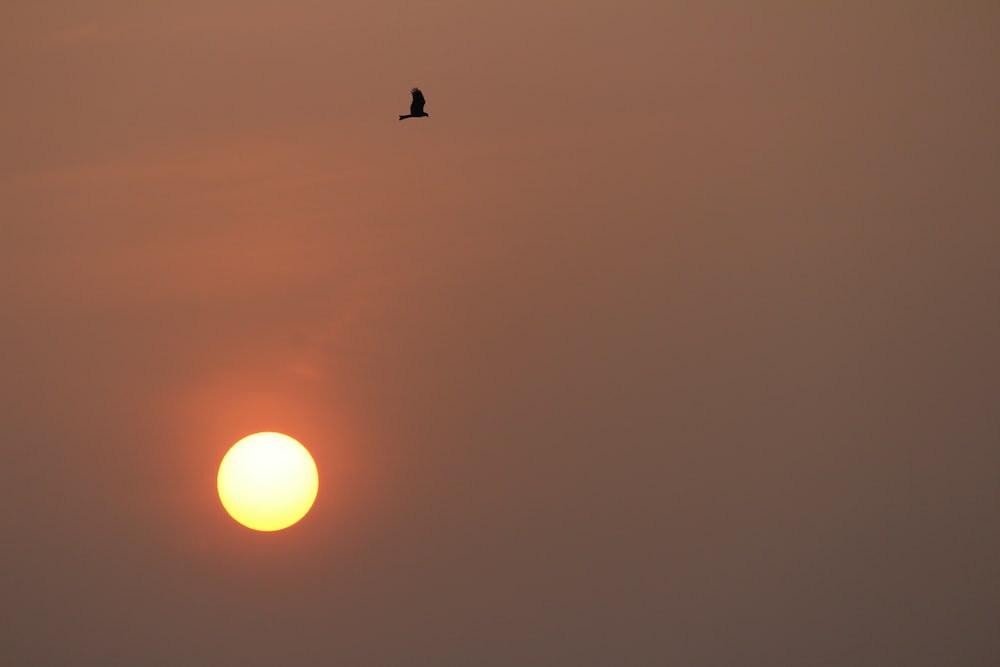 bird flying during golden hour