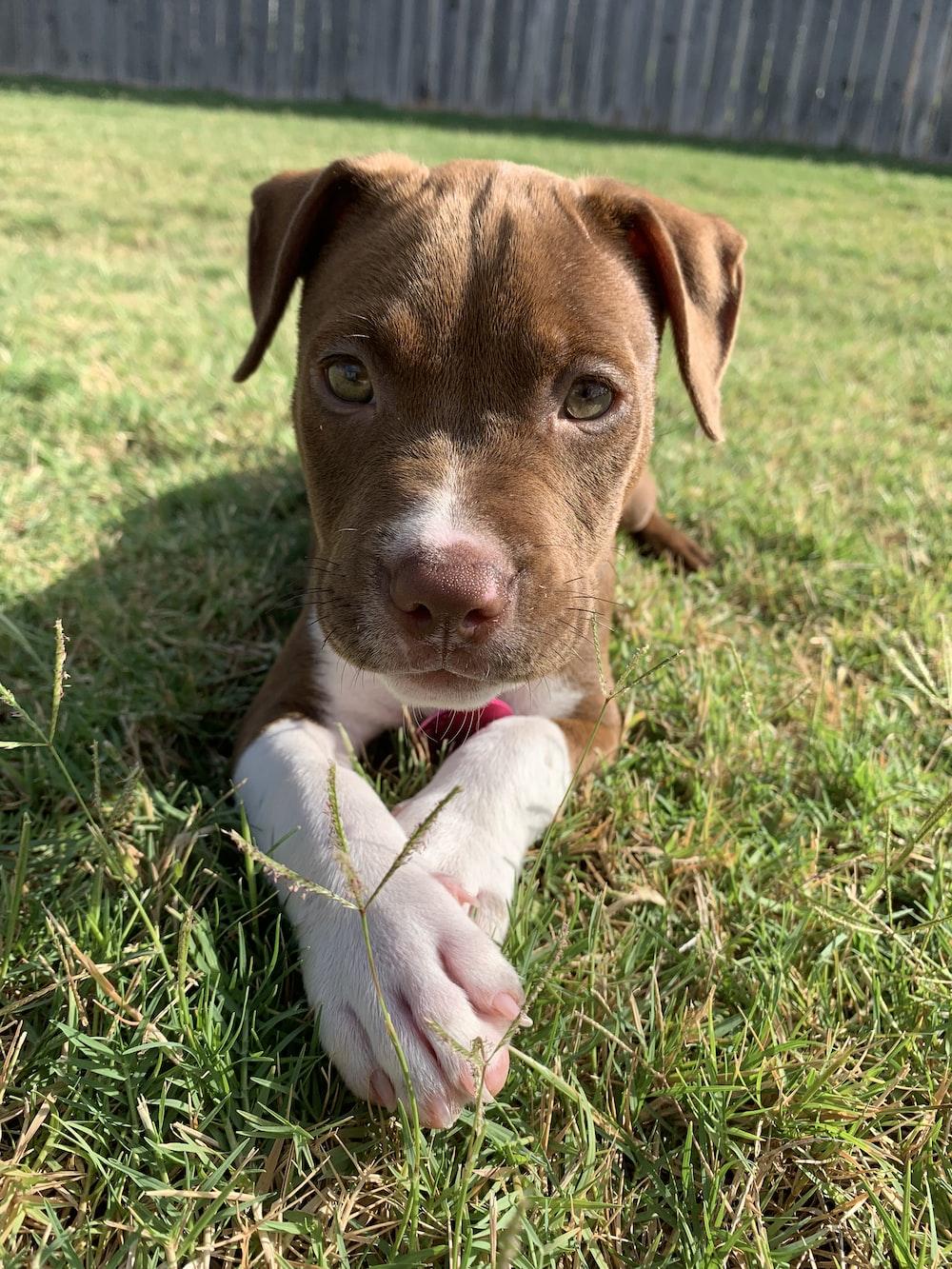 puppy lies on grass
