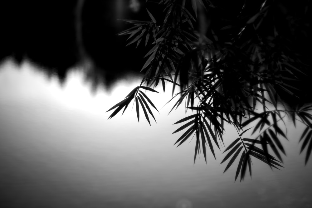 grayscale photo of leafy plant in lake shore