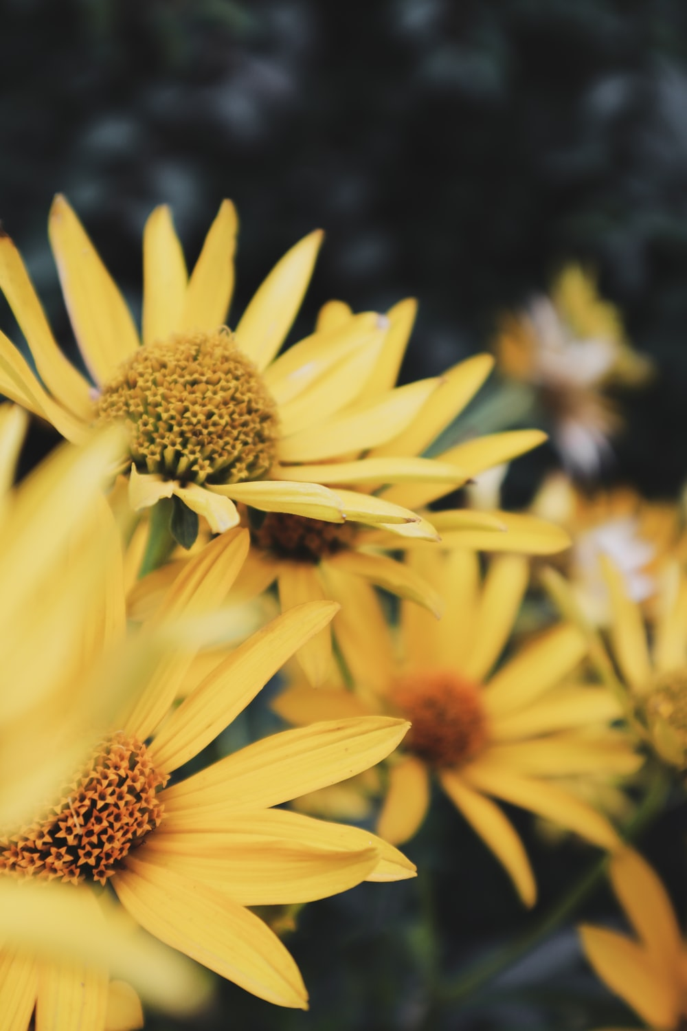 yellow petaled flower lot close-up photography