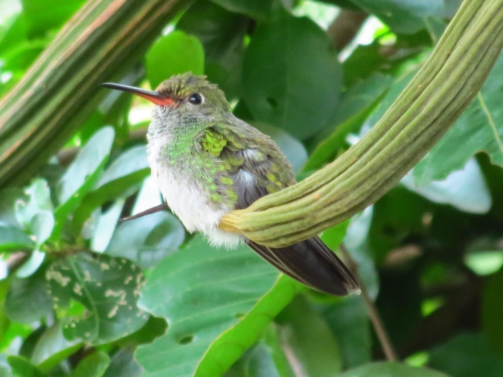 bird perched on plant