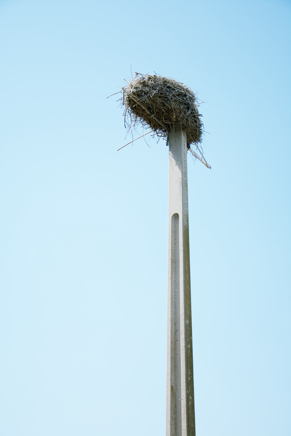 nest on top of pole
