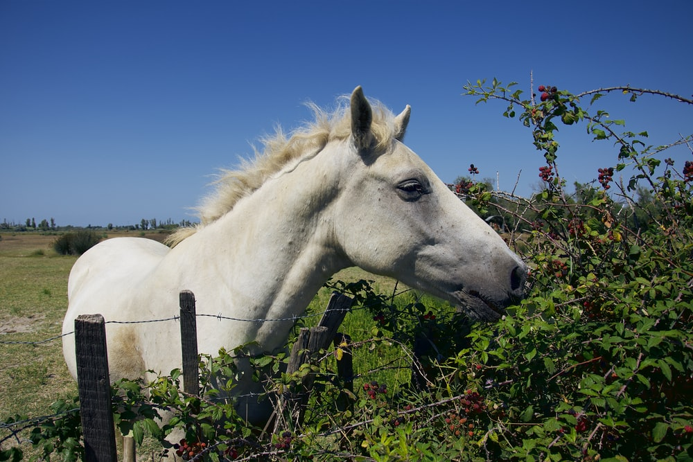 white horse standing beside fence eating