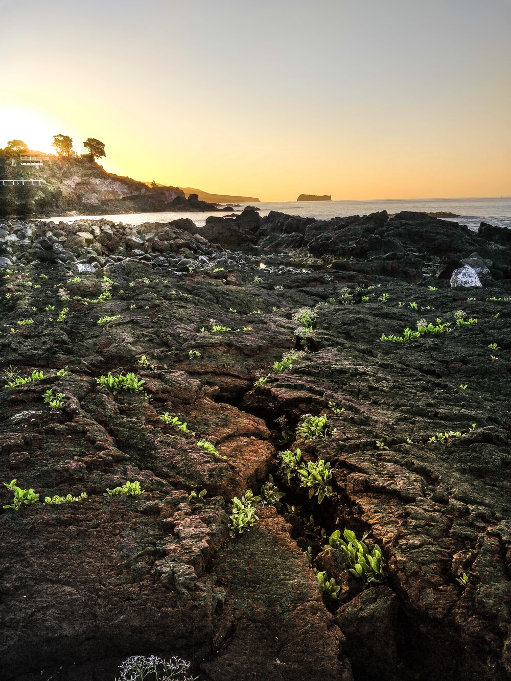 green grass on rock formation