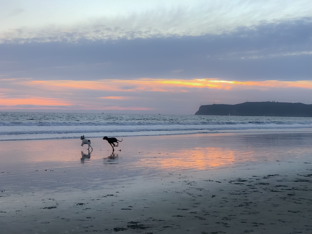 two dogs running on seashore during sunrise
