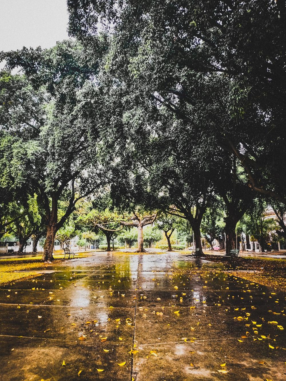 wet road between trees