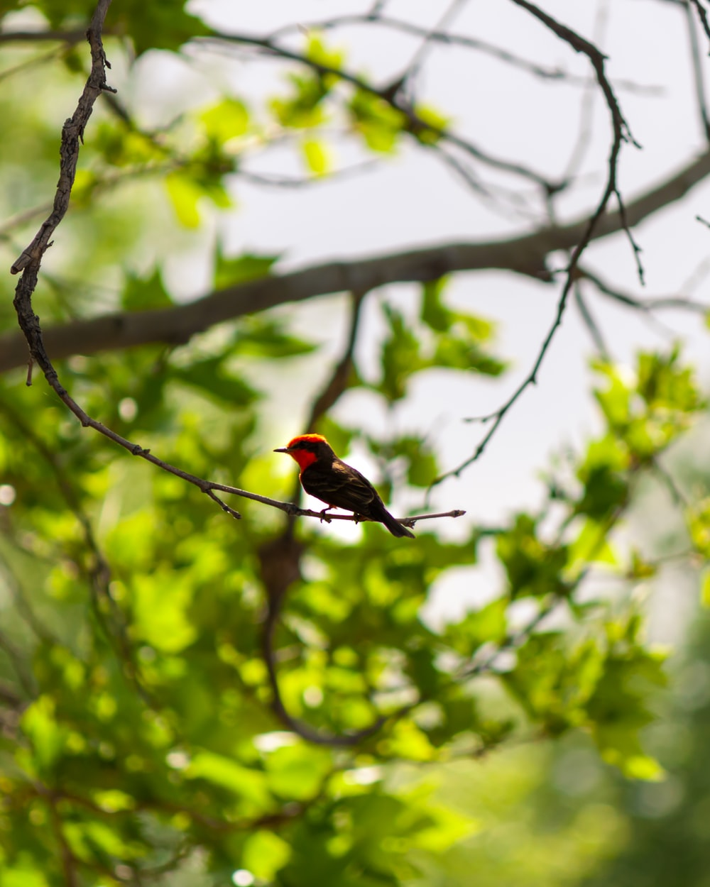 red and brown bird in a branch during daytime