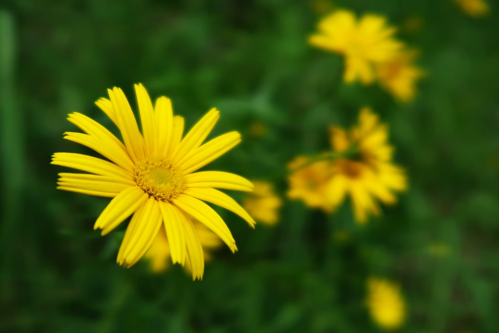 selective focus photo of yellow-petaled flower