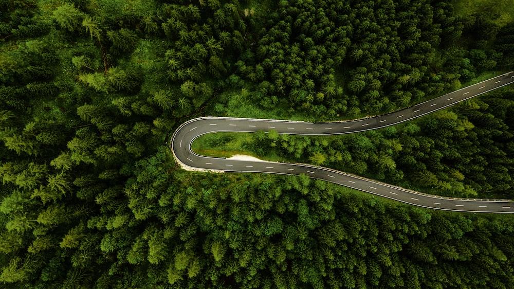 road inside forest at daytime