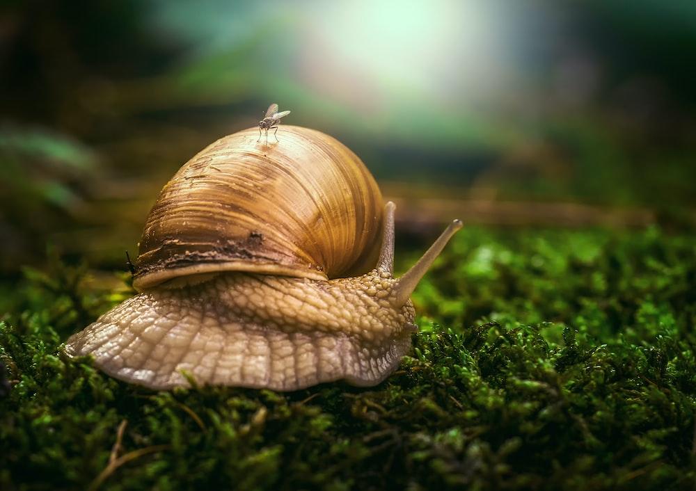 brown snail on grass