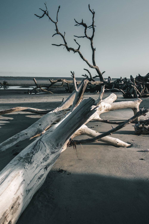 bar trees near seashore
