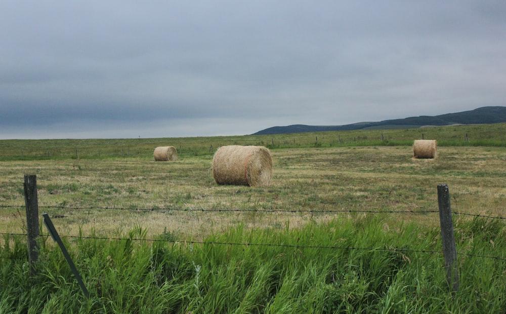 brown hays
