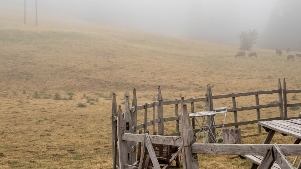 brown wooden fence in grass field