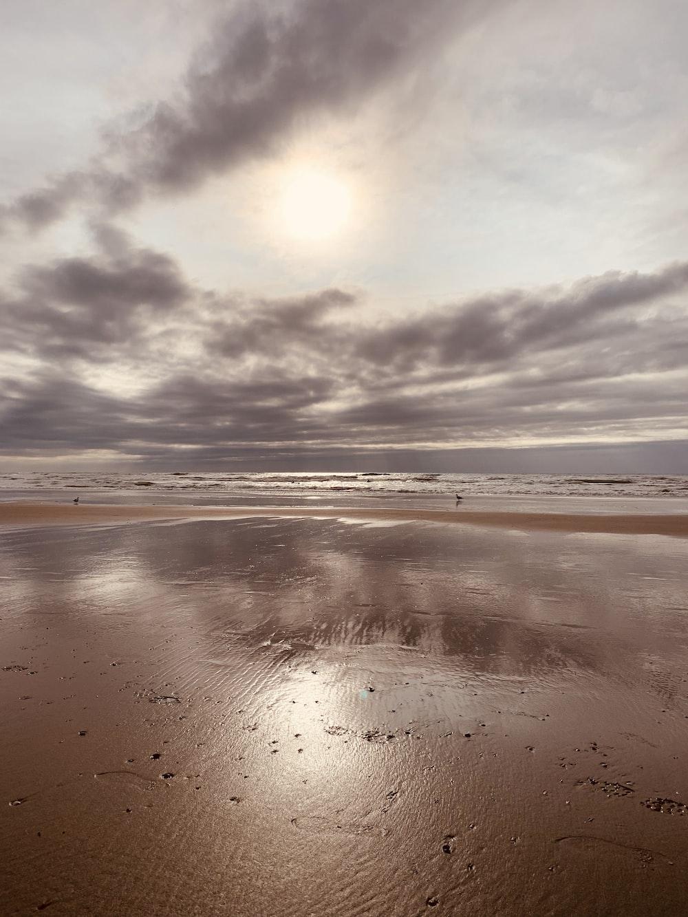 seashore under white sky