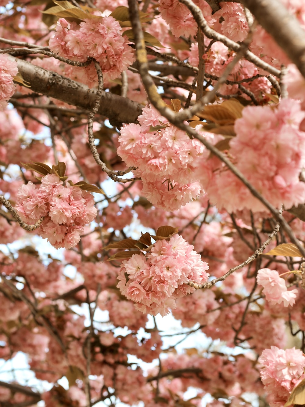 pink cluster flower tree during daytime