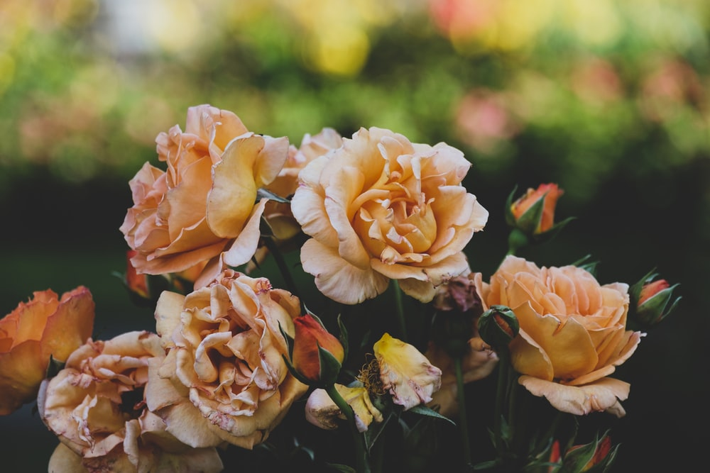 selective focus photography of pink flower arrangement