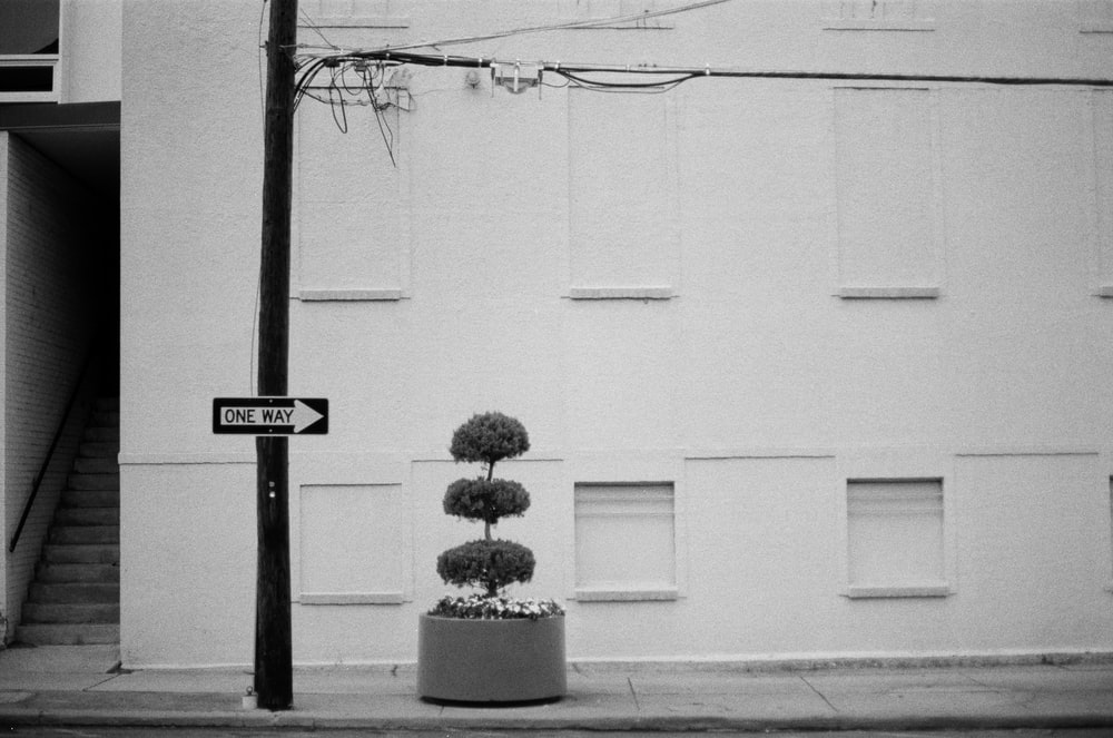 grayscale minimalist photography of a hedge plant beside electric post