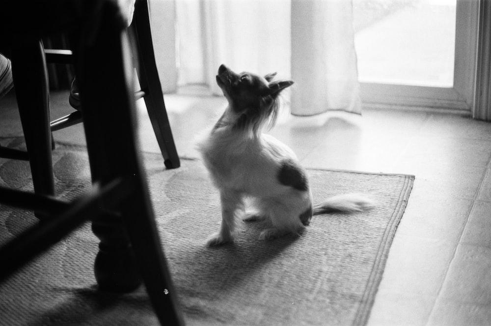 gray-scale photo dog