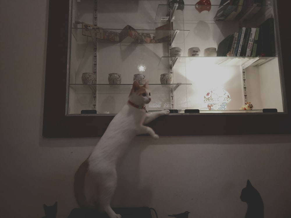 white cat reaching on glass display cabinet
