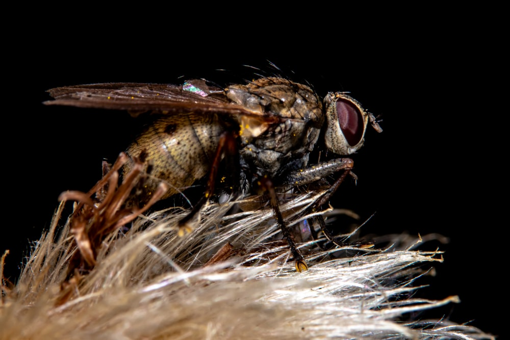 macro photography of common house fly