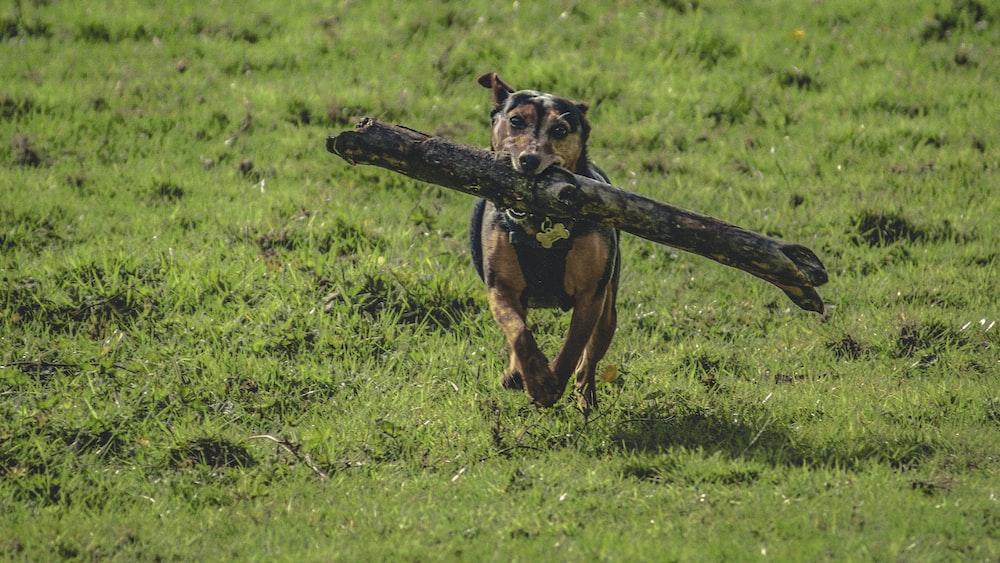 dog biting log