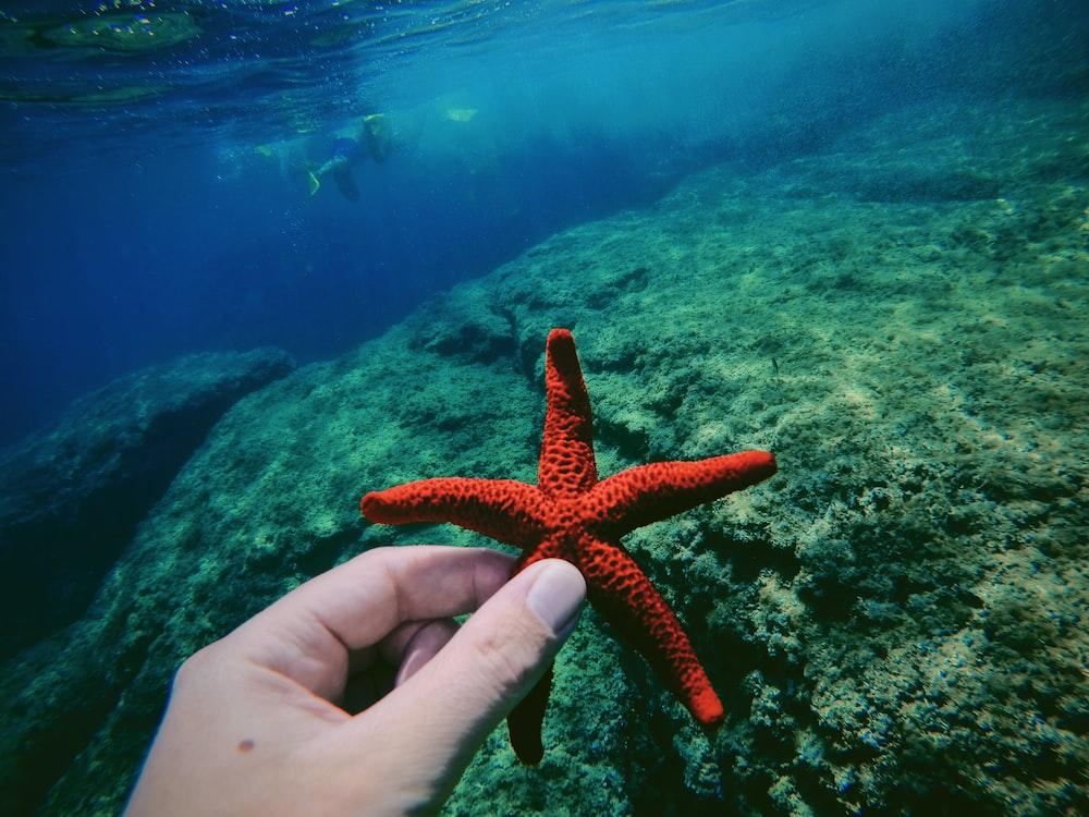 orange starfish