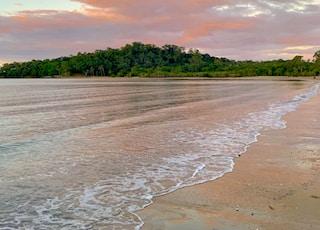 trees on seashore at daytime
