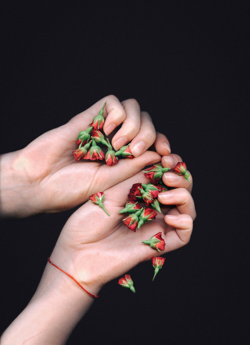 two hands holding red flowers