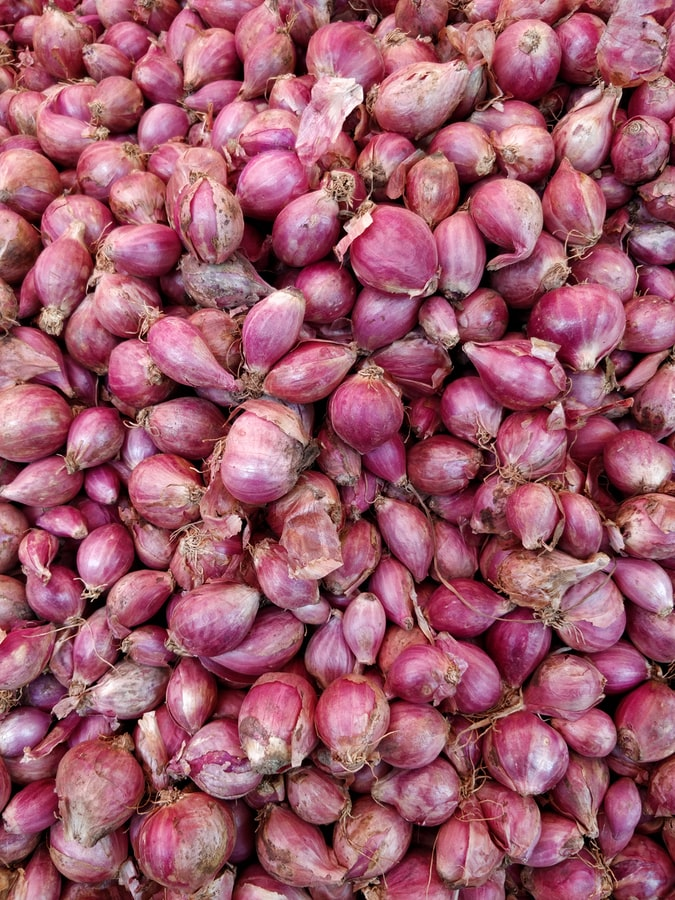 Shallot picture