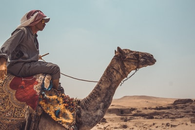 man riding on brown camel close-up photography cairo teams background