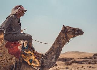 man riding on brown camel close-up photography