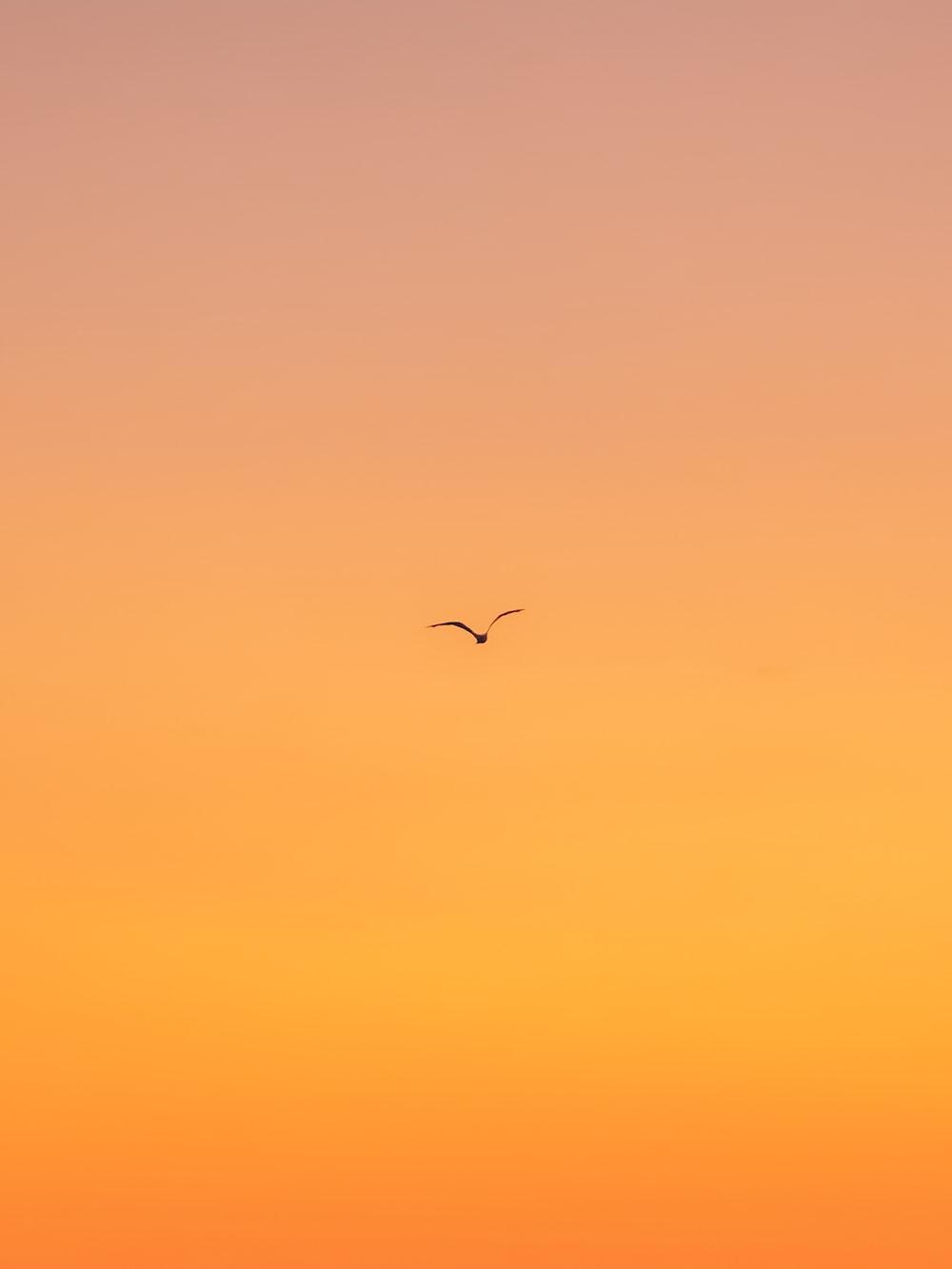 flying bird during daytime