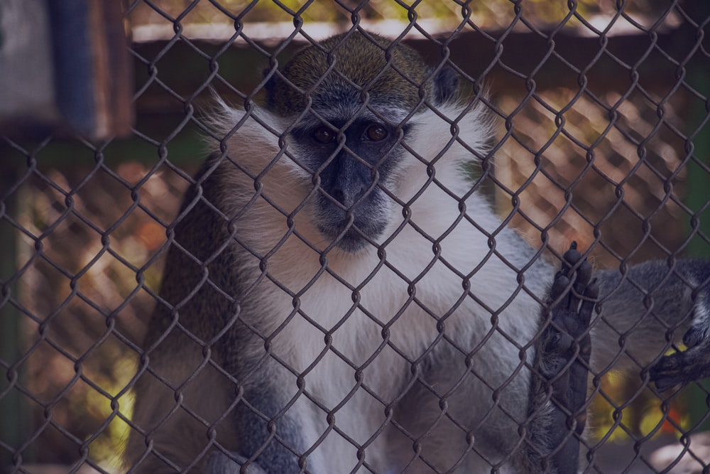 monkey inside cage