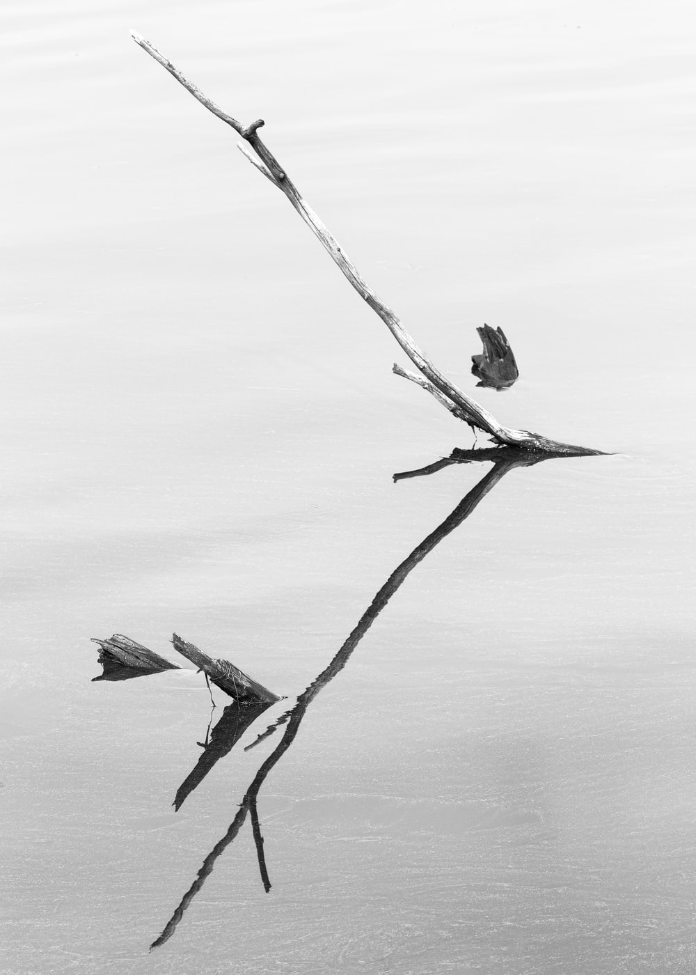 grayscale photo of tree branch on body of water