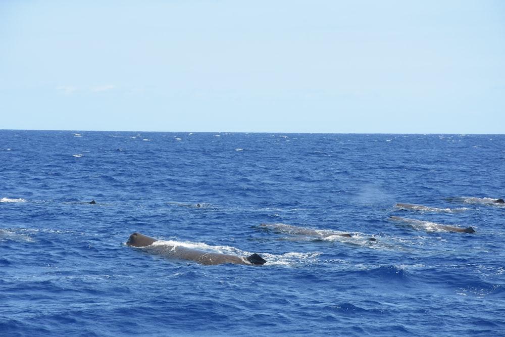 shoal of whales in ocean