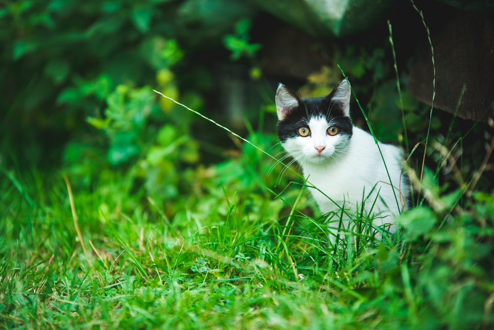 white and black cat on grass field