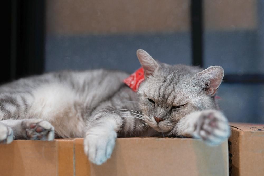 gray cat lying on cardboard box