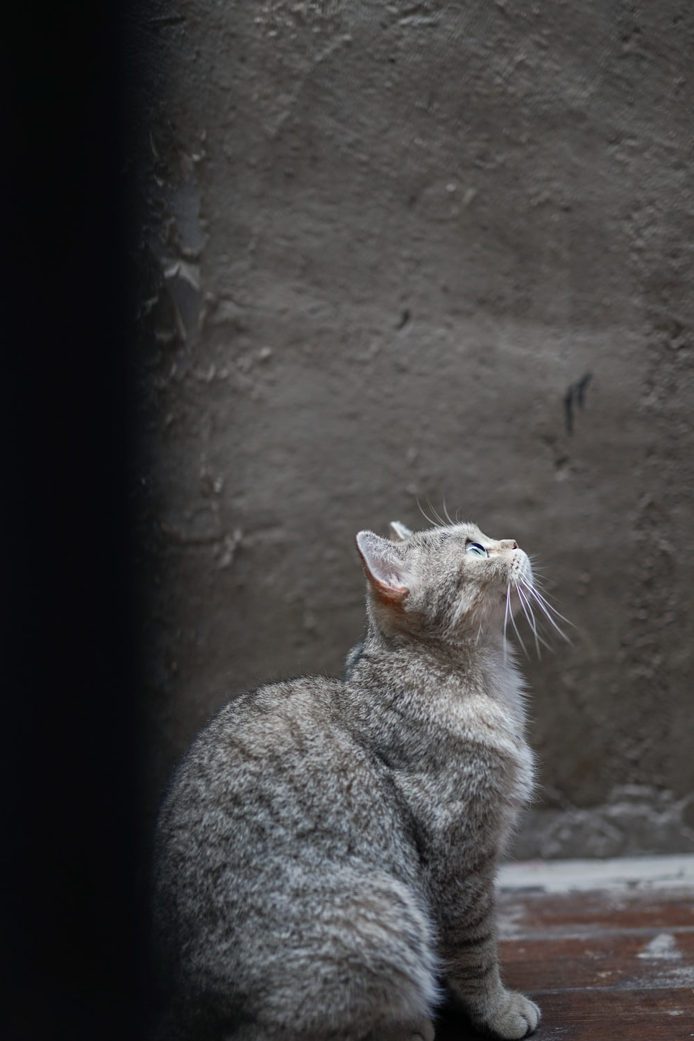 gray and white tabby cat sitting while looking up