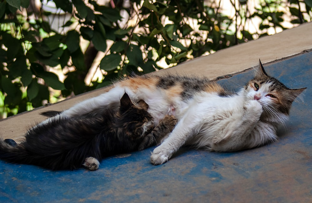 two cats on ground