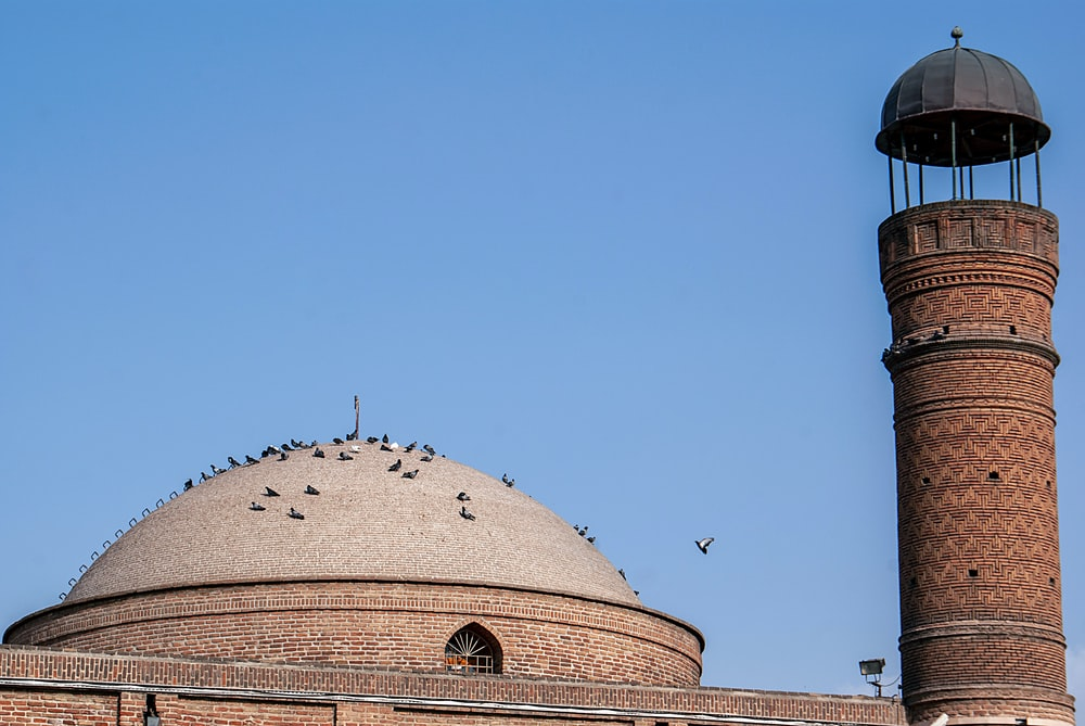 birds on top of dome building during day