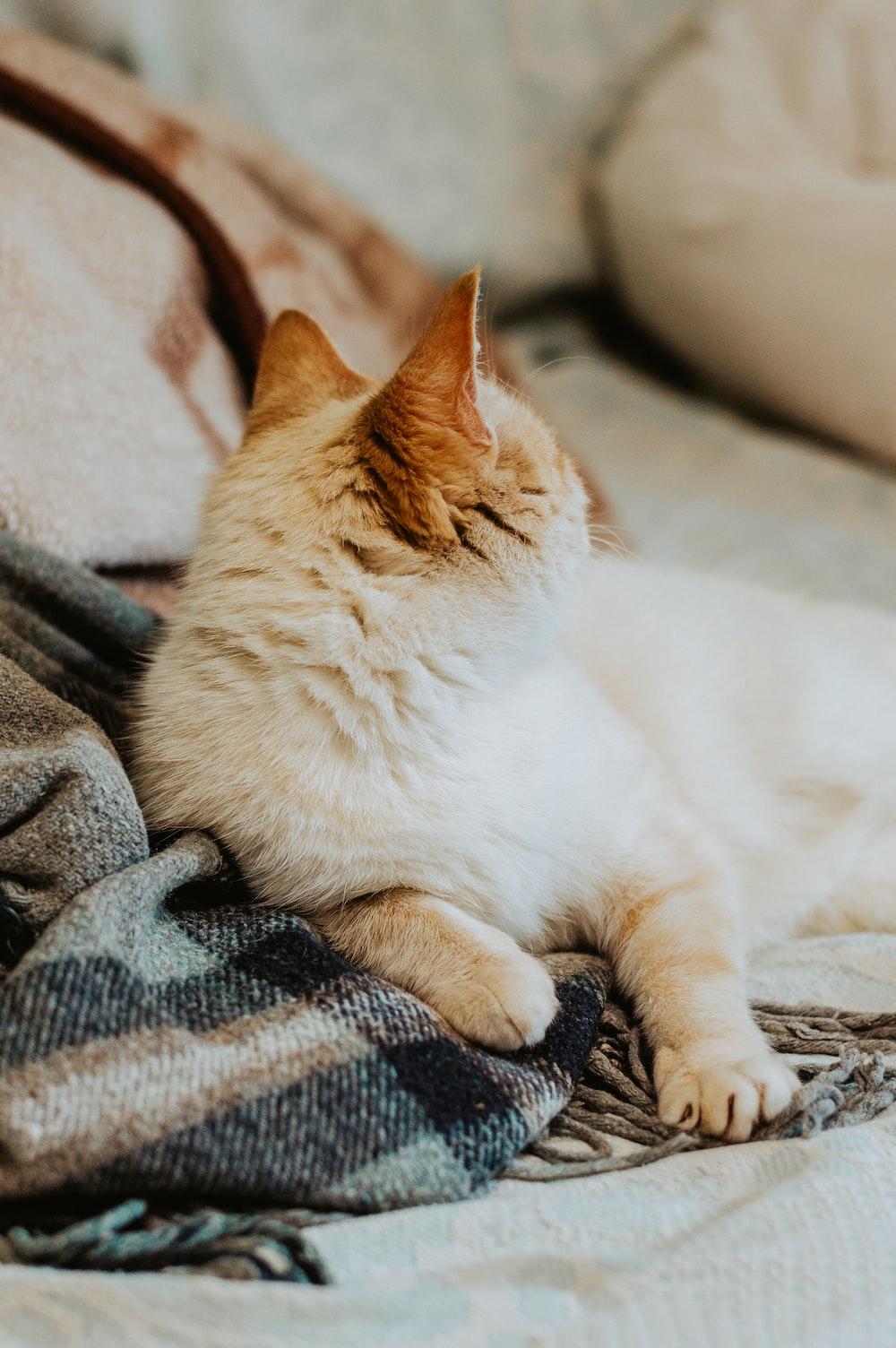 selective focus photography of orange cat