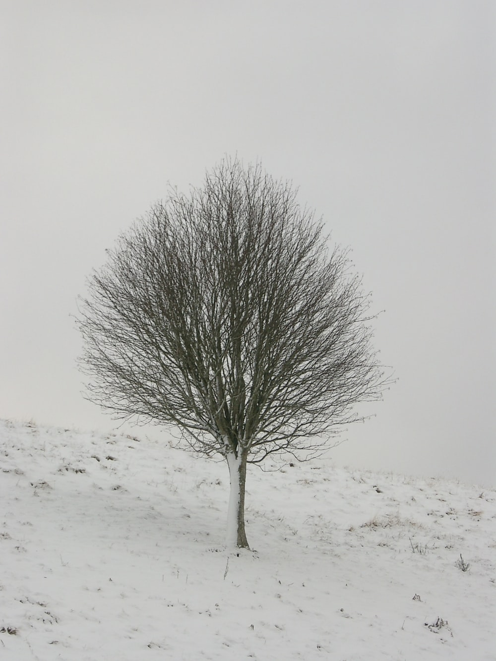 gray bare tree