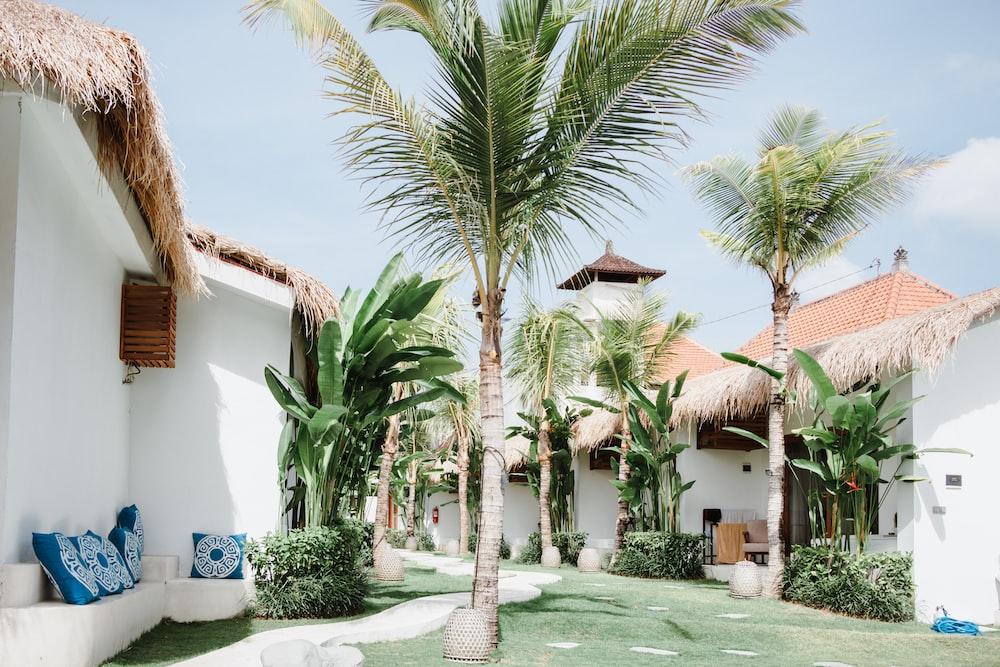 palm tree near house